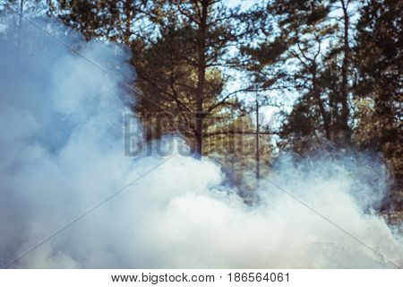 Forest Fire. Clouds Of Heavy Smoke In The Forest