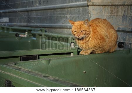 Orange homeless shabby dirty stray cat lying on the filthy garbage container in small downtown alley. Close up. Abandoned animals concept. Homeless animals concept.