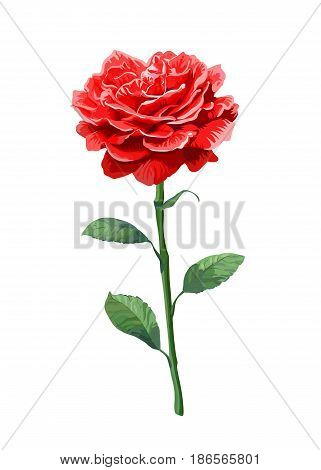 Image of red rose on stem isolated on white background. Art vector illustration.