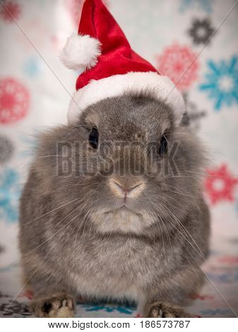 The Santa bunny is ready to deliver presents to all the good boy and girl bunnies around the world