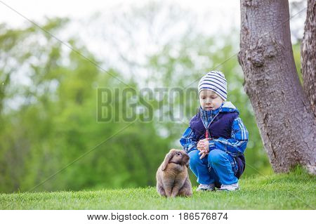 Young boy playing with pet rabbit in spring park