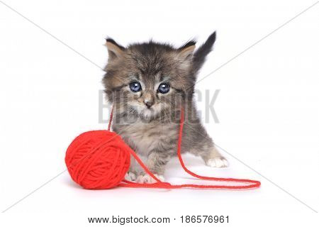 Cute Tiny Kitten Playing With Red Ball of Yarn