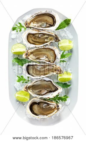 Plate with fresh oysters on ice with pieces of lime. With clipping path.