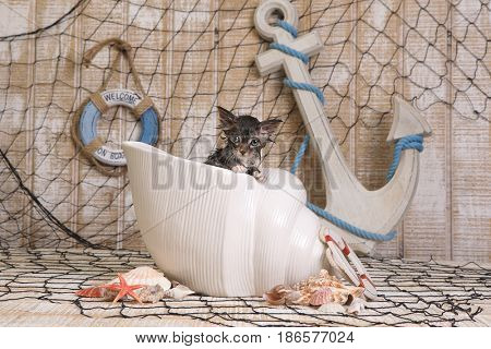 Adorable Dripping Wet Kitten on Ocean Themed Background