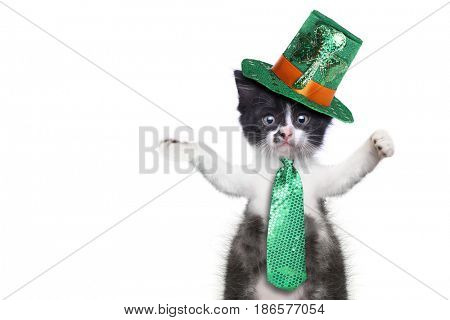 Hilarious Kitten Celebrating the American Holiday Saint Patricks Day