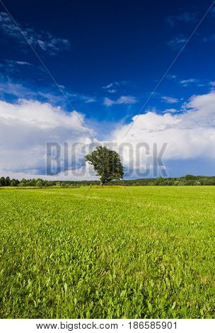 Grass Land Field Landscape