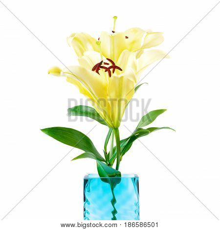 Beautiful soft yellow lily flowers in square vase