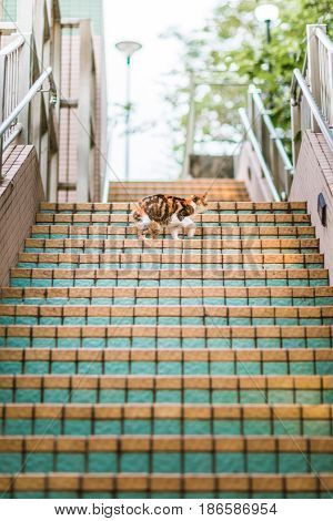Cat in staircase turning around, Hong Kong South