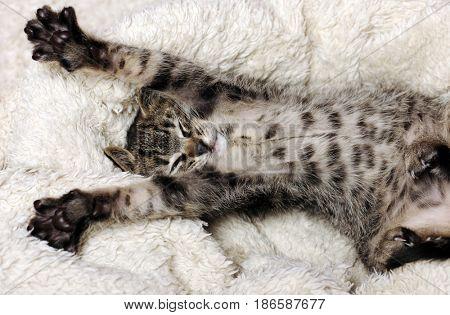funny small kitten