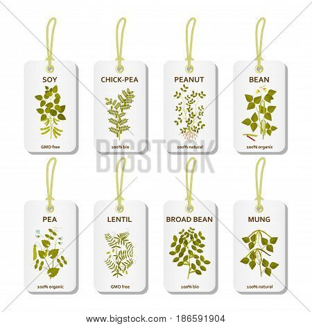Tags with legumes plants with leaves, pods and flowers. Vector illustration.