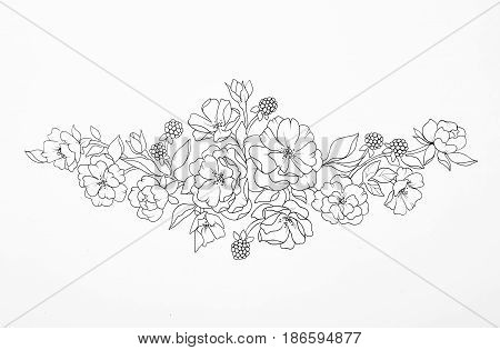 Sketch of a beautiful flowering branch on white background.