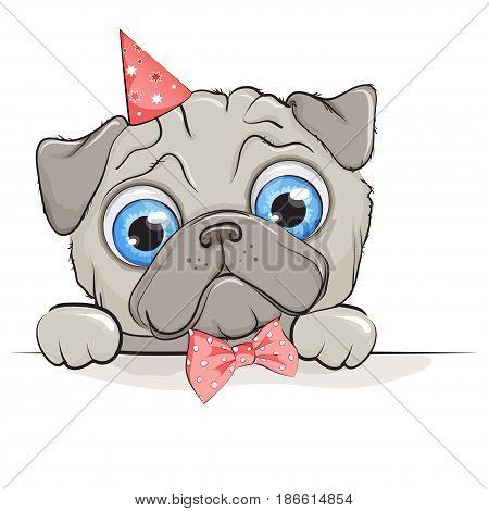 Funny puppy pug dog with big blue eyes on white background