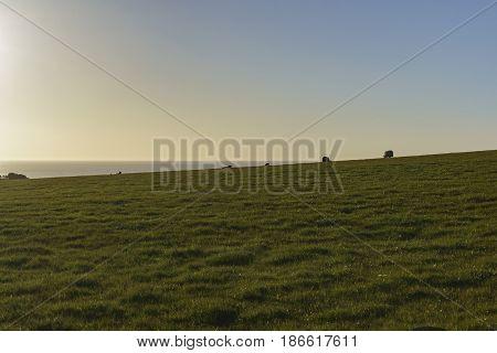 Beautiful Rural Scene With Sheeps