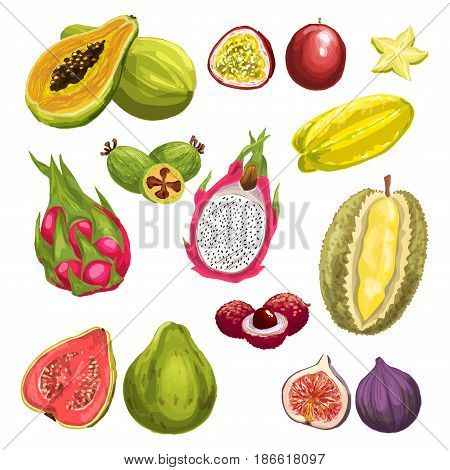 Exotic fruit watercolor set. Fresh tropical dragon fruit, papaya, feijoa, passion fruit, carambola, durian, guava, lychee, fig whole fruit and slices isolated hand drawn illustration for food design