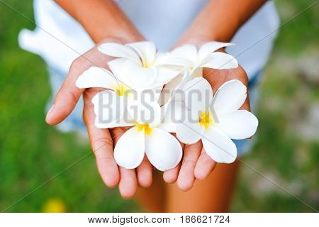 Young female hands offering frangipani flumeria flowers