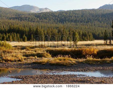 Deers In An Alpine Meadow