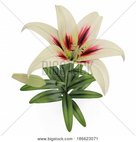 White Lily on white background. Top view. 3D illustration