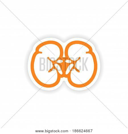 paper sticker on white background human kidney