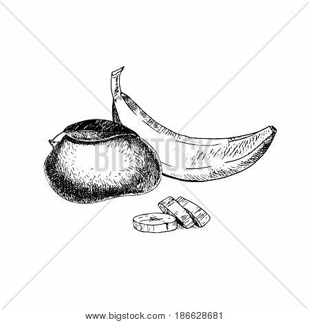 Vector hand drawn exotic fruits. Engraved smoothie bowl ingredients. Tropical sweet food. Whole mango banana and slices. Use for exotic restaurant food party