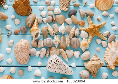 Seashells flat lay pattern on blue wood, sea vacation collection background on wooden planks, top view