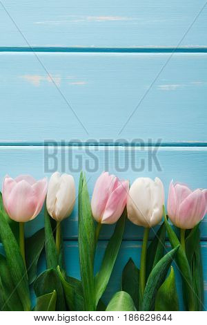 Fresh tulips on blue wood background, copy space. Bouquet of spring flowers, mockup for greeting card