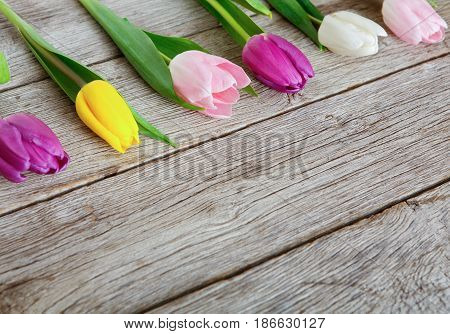 Colorful tulips row on rustic wood background, copy space. Spring fresh flowers, mockup for greeting card