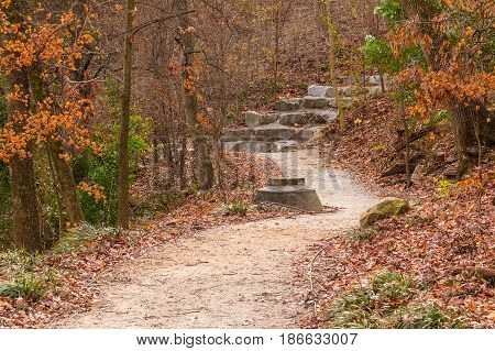 The Wetlands Trail and thicket of bare trees in the Piedmont Park in autumn day Atlanta USA