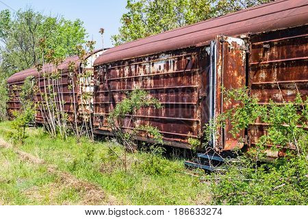 Old refrigerated railway wagon captured by vegetation