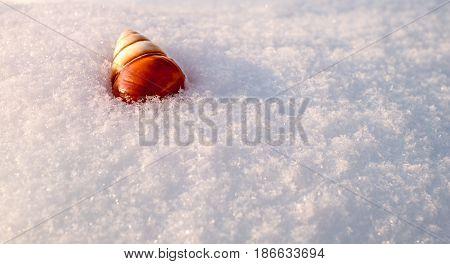 Snail shell in fresh snow, closeup view