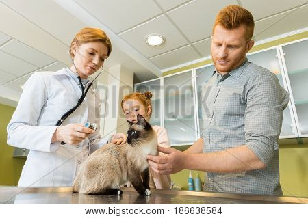 Woman Veterinary Ausculting Cat With Stethoscope At Clinic