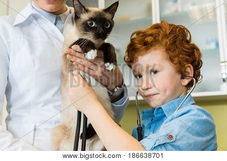 Doctor with cute red haired boy ausculting cat with stethoscope