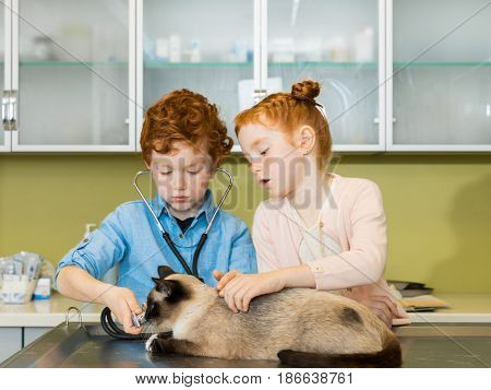 Cute Red Haired Siblings Boy And Girl Ausculting Cat At Clinic