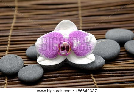 White orchid with gray stones with,on mat