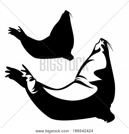 steller sea lion (Eumetopias jubatus) black and white vector design and silhouette
