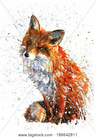 Fox, animals, watercolor, wild, illustration, graphic, wildlife
