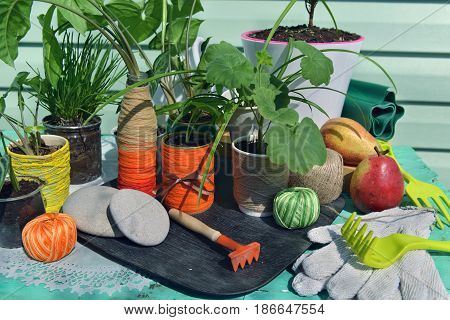 Still life with home green plants outdoors in sunlight. Gardening still life with flowerpots, houseplants, tools and planting supplies
