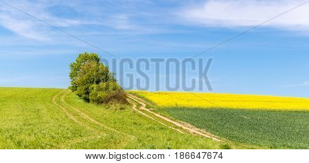 Amazing Colorful Spring Countryside With Dirt Road