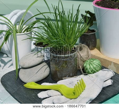 Close up with onion, rake and home plants. Gardening still life with flowerpots, houseplants, tools and planting supplies