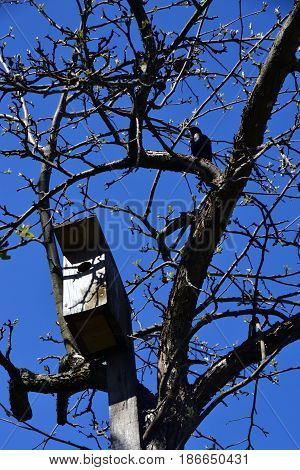 Starling and birdhouse on the tree .