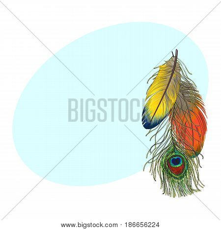 Hand drawn set of colorful bird feathers, parrots and peacock, sketch style vector illustration with space for tex.