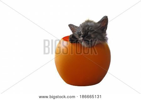 sleeping cute cat in plastic box isolated on white background