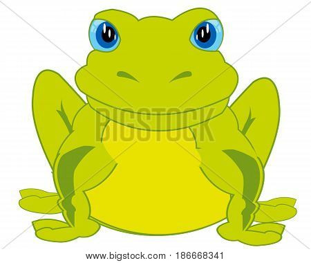 Amphibian toad on white background is insulated