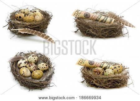 Eggs and money lie in a nest on a white background. Horizontal photo.