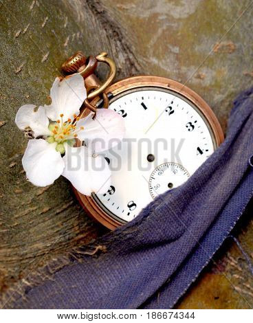 vintage clock and apple flowerimage of a
