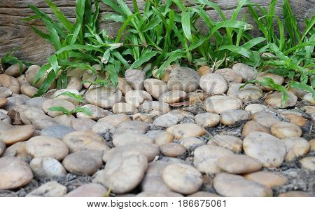This area is a stone floor with nature green grass. Round stone background; round Pebble stone texture. It has the distinction of stone color.
