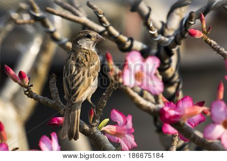 Image of sparrow on nature background. Bird