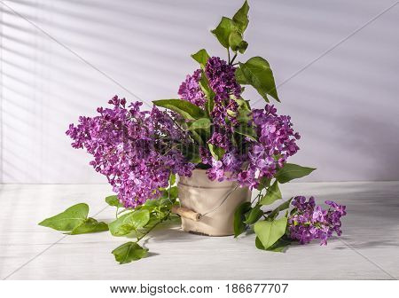 Still life with fresh lilac flowers in vase