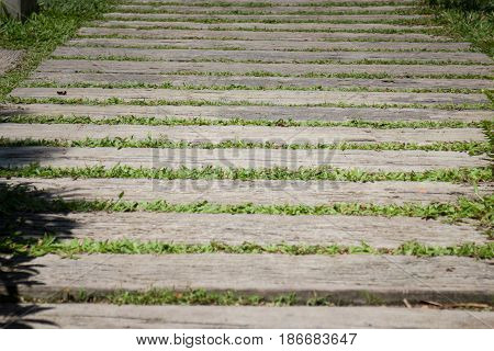 Summer Green Grass Step In Garden stock photo