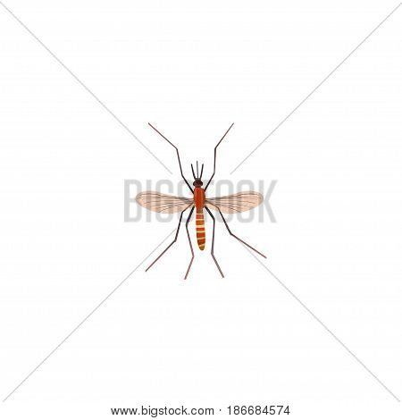 Realistic Mosquito Element. Vector Illustration Of Realistic Gnat Isolated On Clean Background. Can Be Used As Gnat, Mosquito And Alive Symbols.