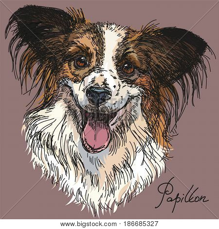 Papillon portrait vector hand drawing illustration in different colors on grey background